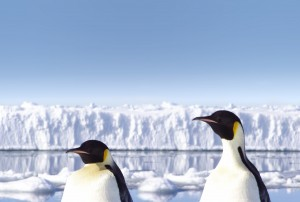 bigstock-Penguins-in-Antarctica-15028127